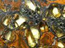 Pallasit (Meteorit) Jepara