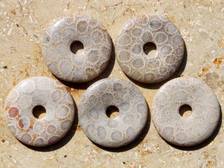 Versteinerte Koralle Donut 3 cm